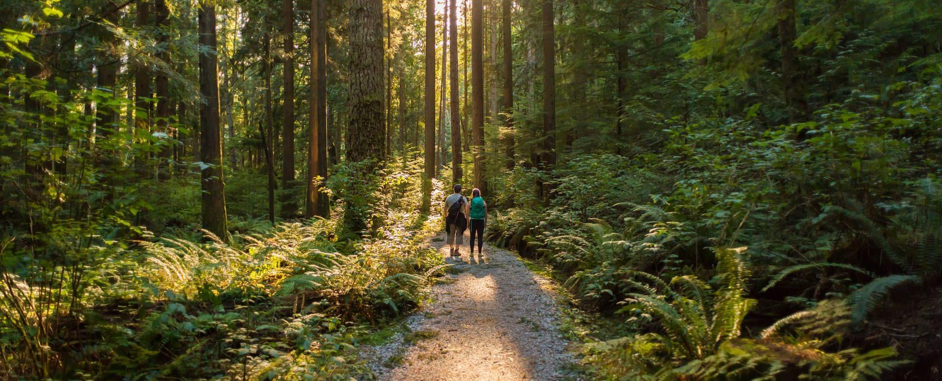walks-forest-cedar-lodge-hotel.min_-e1548427508621.jpg